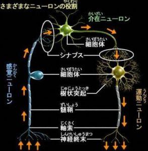 ニューロンコード