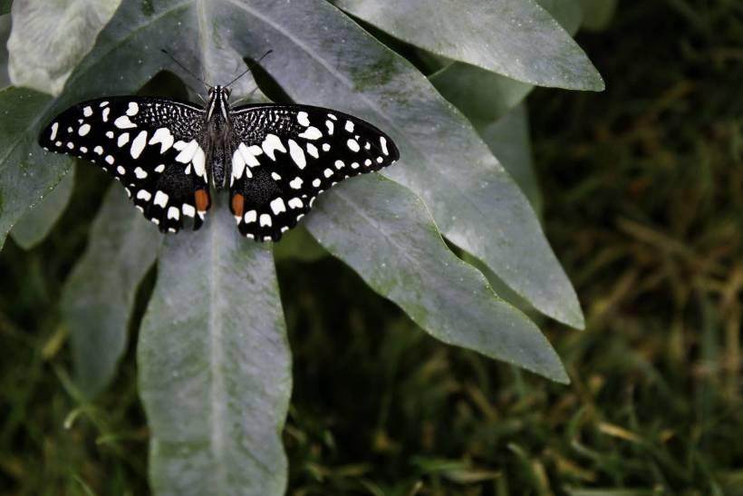 Foto farfalle