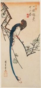 Utagawa Hiroshige Uccello del paradiso e susino in fiore 1830-35 circa