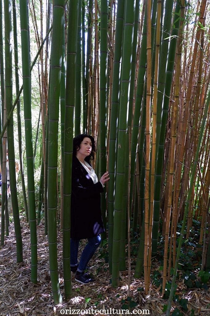 La foresta dei Bambù, Orto Botanico di Roma cosa vedere