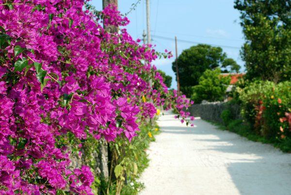 Okinawa, i colori di Taketomi