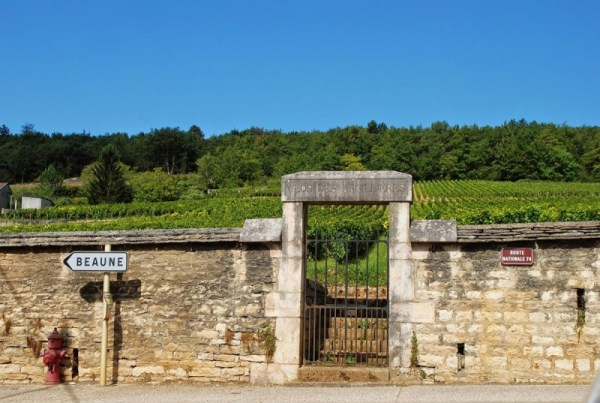Il clos des Argillieres, premier cru, in Borgogna (foto di Patrick Colgan, 2014)