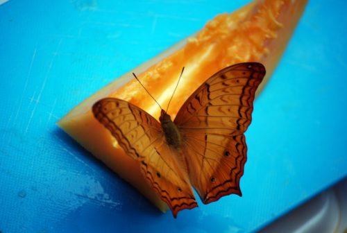 farfalla in laos