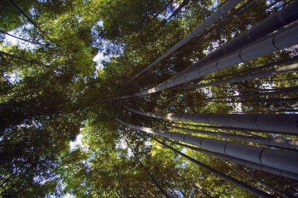 un giorno ad Arashiyama: si comincia dalla foresta di bambù