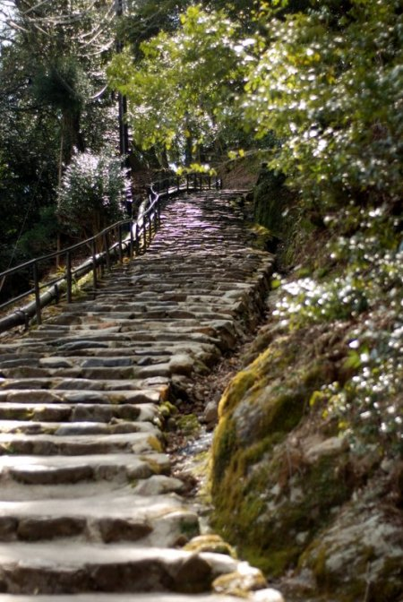 The climb to Jingo-ji