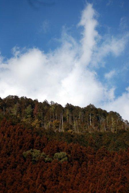 Woods around Kyoto