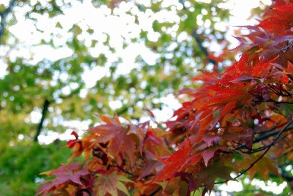 Nikko in autunno: giardino Shoyoen