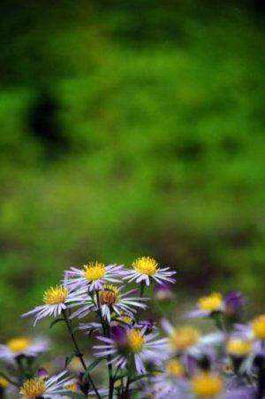 Giardino botanico di Sapporo