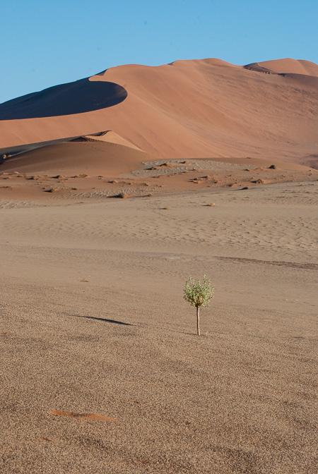 Fra le dune di Sossusvlei, Namibia