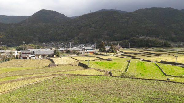 Risaie nella prefettura di Oita