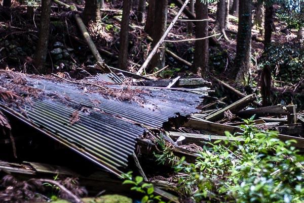 I resti di un edificio in mezzo al bosco, qui c'erano alcune case fino a pochi decenni fa