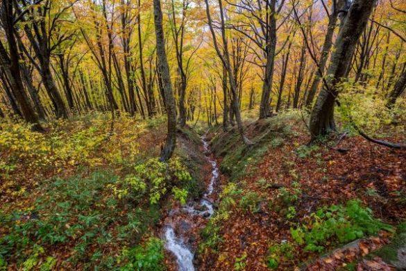 I boschi del monte Yudono in autunno