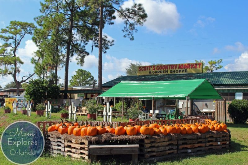 This is the best corn maze in Central Florida. So close to Orlando and SO much to do!