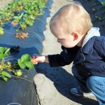 This is a GREAT local farm where you can pick your own strawberries and blueberries! The kids will LOVE it!