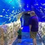 Our Visit to Sea Life Orlando Aquarium