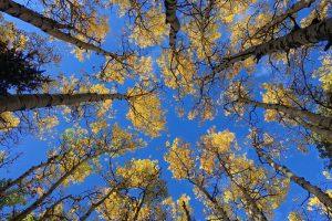 Global Warming = Tree Killer?