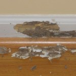termite bonds