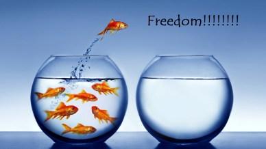 free will-orlando espinosa