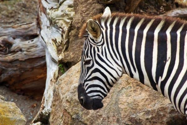 7 Places to See Animals in Orlando