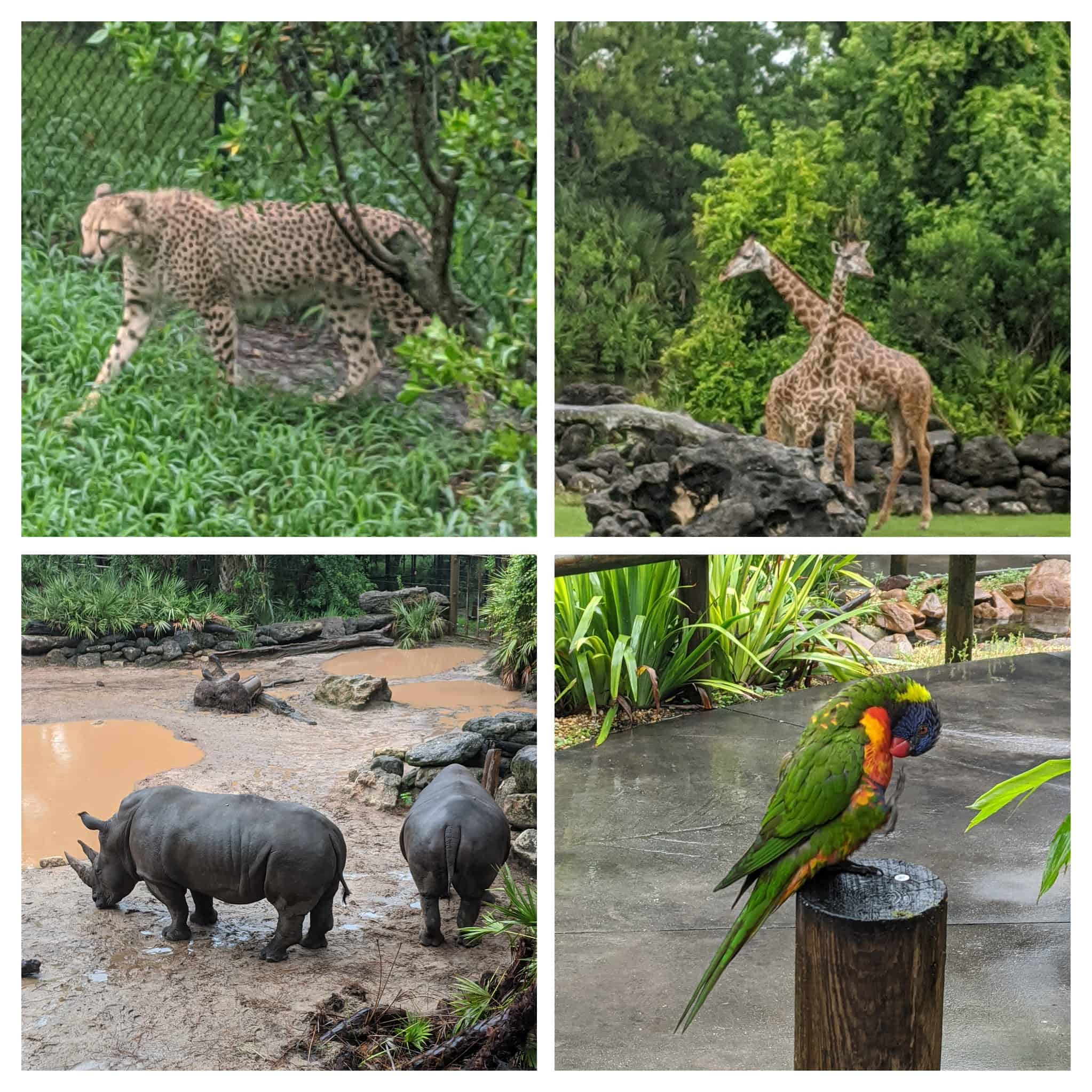 things to do with kids at Central Florida Zoo