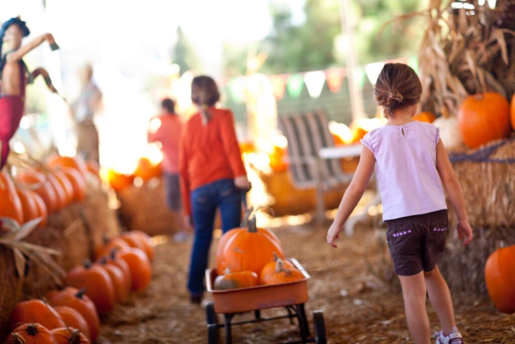 pumpkin picking orlando