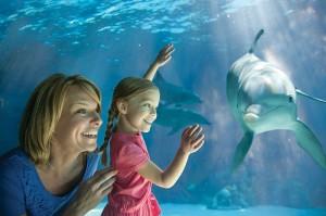 SeaWorld Orlando Teacher Card