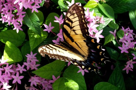 Image of butterfly at Leu Gardens Orlando