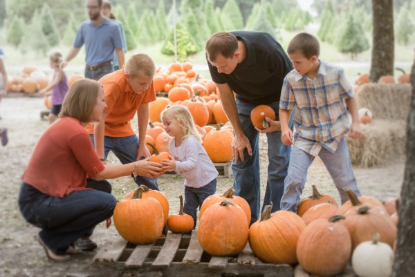 Orlando pumpkin patches: image of family picking pumpkins at Santa's Farm in Eustis, Florida.