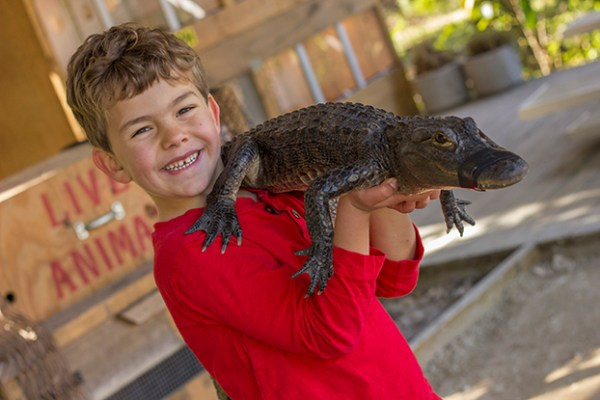 Wild Florida Gator Park: image of boy holding a Florida Alligator at Wild Florida in Kissimmee.