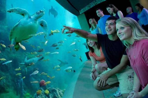 SeaWorld Orlando: image of people watching turtle swim at TurtleTrek