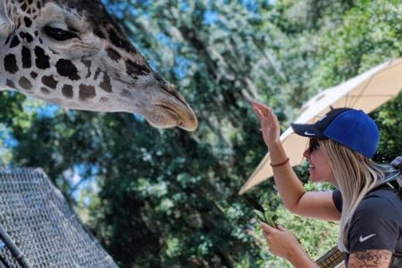 Cheap things to do in Orlando: image of a woman feeding at giraffe at the Central Florida Zoo in Sanford, Florida