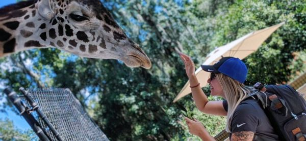 Free things to do online in Orlando: image of a woman feeding at giraffe at the Central Florida Zoo in Sanford, Florida