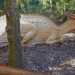 Things to do Orlando: image of life-size dinosaur in Leu Gardens. Dinosaur Invasion exhibit comes to Harry P. Leu Gardens in Orlando.