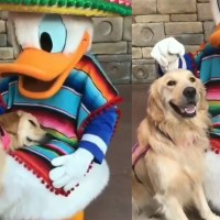 Service Dog Cuddles With Donald Duck at Epcot in Heartwarming Video
