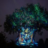 Disney's Animal Kingdom Park Hours Extended for Select Dates in December 2019 and January 2019