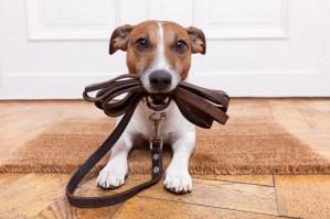 Orlando Pet Care Options