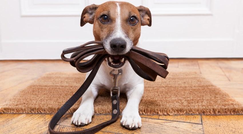 Orlando Vacation Pet Care Options