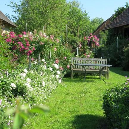 Rosengarten Laafeld 091