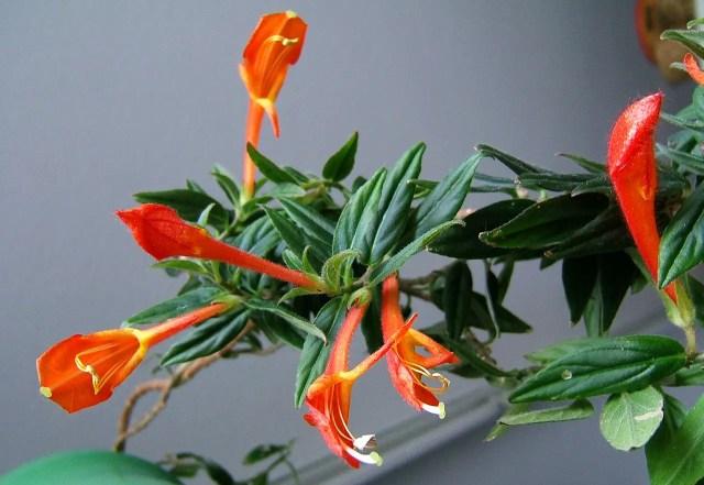 Plantas trepadoras y rastreras