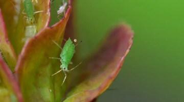 12 plagas más comunes que atacan a las plantas ornamentales