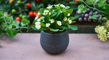 Tipos de macetas y sustratos para cultivar plantas ornamentales