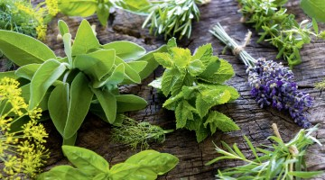 Plantas aromáticas que puedes cultivar en casa y el jardín