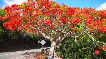 Beneficios de plantar árboles