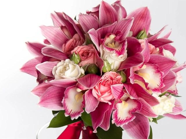 Orquídeas para regalar