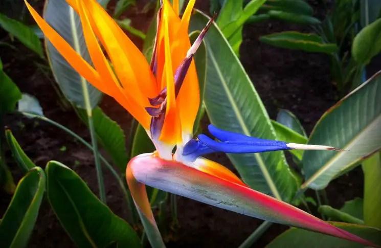 plantas-tropicales