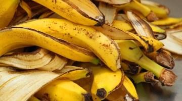 Fertilizante orgánico con cáscara de plátano o banana