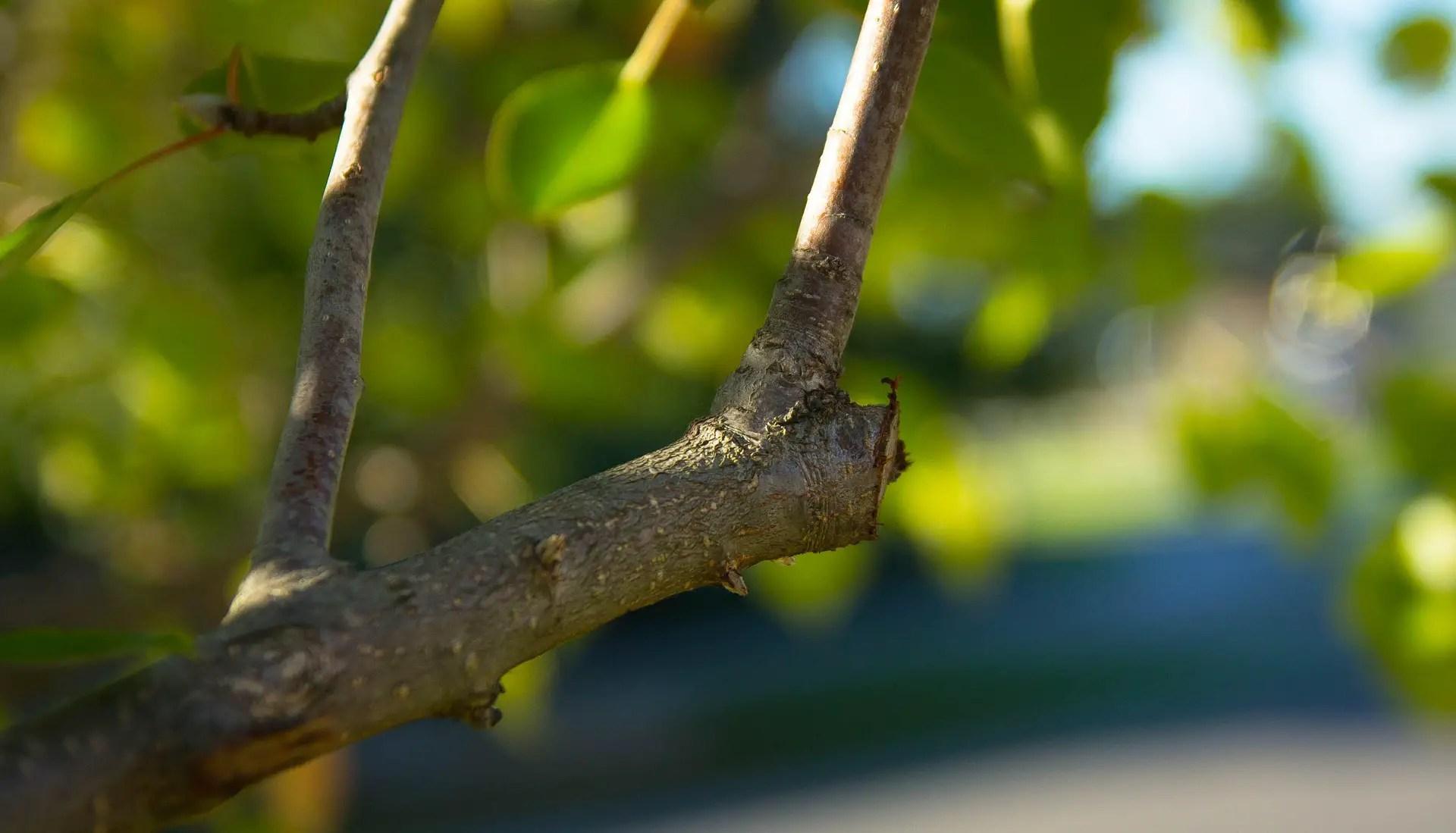 Poda de Árboles y Arbustos
