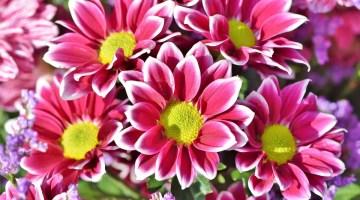 Por qué mis plantas no florecen