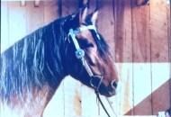 silvio - 0330 - horse 1