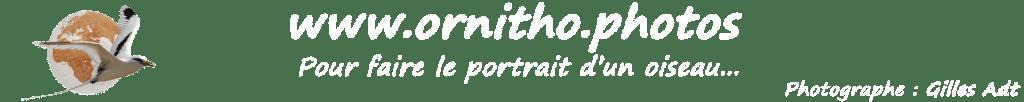 logo du site ornitho.photos